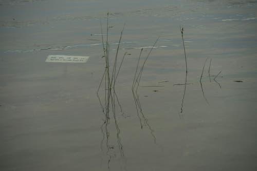"""""""Baden verboten"""" - unter Wasser: Sandro Schmid fotografierte am Montagabend auf der Insel Werd bei Stein am Rhein. (Bild: Sandro Schmid/Leserbild)"""