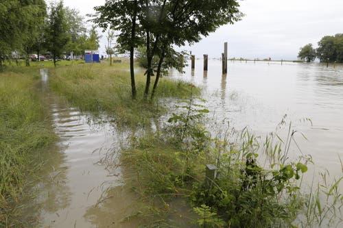 Unter Wasser stehender Uferweg am Rheinspitz, Altenrhein. (Bild: Rudolf Hirtl)