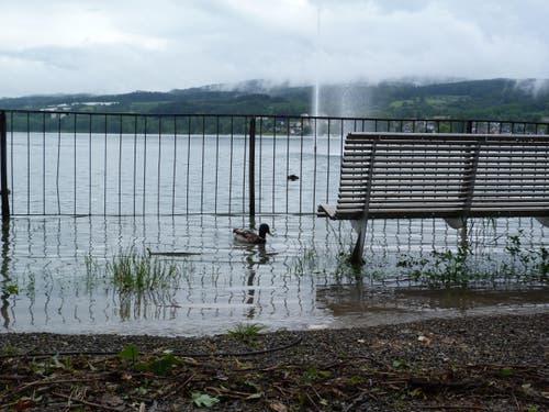 Steckborn: Die Bank vor der Fontäne steht schon im Wasser. (Bild: Gudrun Enders)