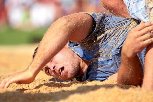 Ein Schwinger taucht ins Sägemehl. (Bild: Swiss-Image)