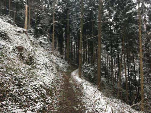 Wanderung 15.02.2018 (Bild: Laura Widmer)