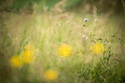 Eine Blumenwiese in Boltshausen. Seit 2009 unterstützt das Thurgauer Amt für Raumentwicklung Landwirte bei der Ansaat von Blumenwiesen - finanziell wie beratend. Damit soll die Artenvielfalt gesteigert werden. (Bild: Reto Martin)