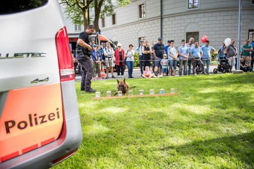 Der Polizeispürhund erschnüffelt Drogen. Bild: Roger Grütter