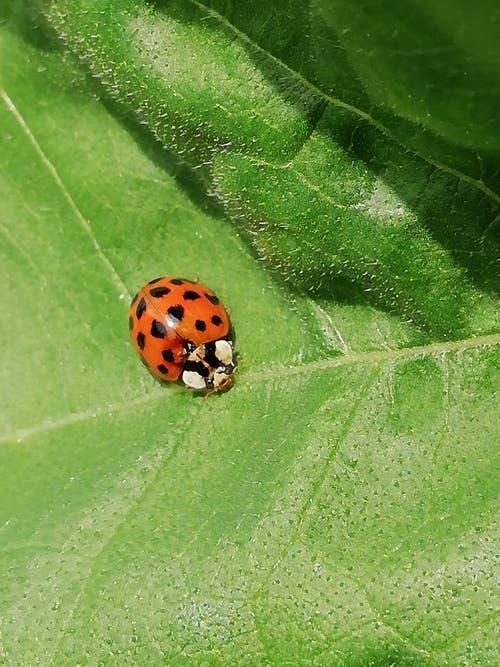 Ein Käfer auf Spurensuche. (Bild: Marianne Hess)