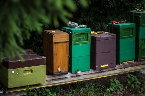 Jedes Bienenvolk bewohnt ein Magazin und erhält eine Nummer zugeteilt. Das Gewicht der Magazine wird dauernd überwacht. Sollte ein Schwarm ausziehen, erhält der Imker eine Nachricht auf sein Smartphone.