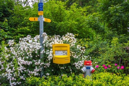 Romantischer Briefkasten in St. Gallen St. Georgen. (Bild: Chris Forster)