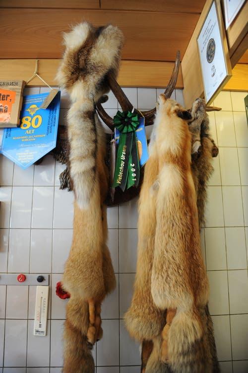Wenn Ferdi Muheim in Russland ist, geht er auch ab und zu auf die Jagd. Ein paar Trophäen hängen auch in seiner Metzgerei in Andermatt. (Bild: Urs Hanhart, 8. Juni 2018)