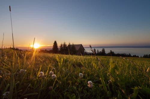 Traum- oder zauberhaft? Sonnenuntergang auf der Eggersrieter Höhe. (Bild: Franziska Ulmann)