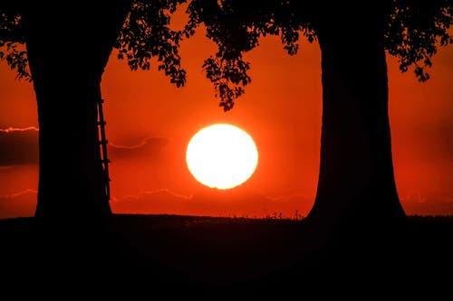 Glühende Sonne bei Gossau. (Bild: Luciano Pau)