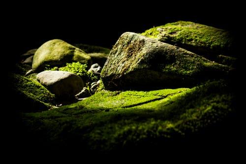 Ein Stein (oder ist es ein Fels?) erhebt sich aus dem saftig grünen Moos am Moosbach in Rehetobel. (Bild: Matthias Rozinek)