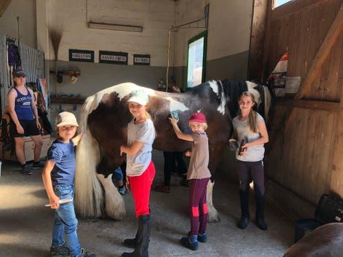 Teilnehmer des Reitlagers Hanny-Fee in Lifelen reinigen ein Pony. (Bild: Hanny Odermatt)