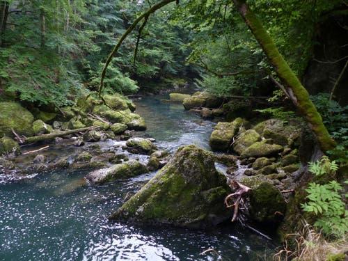 Natur pur. Thurweg zwischen Krummenau und Brandholz. (Bild: Martin Giger)