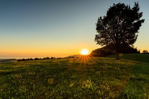 Sonnenaufgang auf dem Chapf. (Bild: Christian Wild)