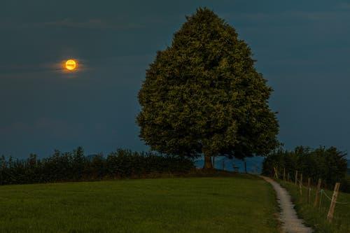 Ende der Showtime, der Mond geht unter auf dem Chapf, St. Gallen. (Bild: Christian Wild)