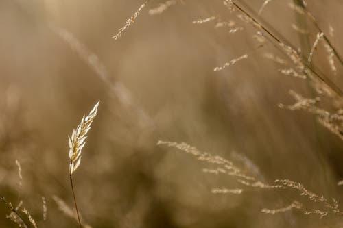 Durchleuchtet von der Abendsonne auf dem Scheitlinsbüchel. (Bild: Christian Wild)