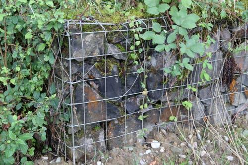 Das durch ein Drahtgeflecht geschützte Mäuerchen am Rand des Eisenbahntrassees wird auch bereits überwuchert. (Bild: Reto Voneschen)
