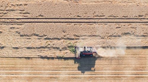 Mähen in der Hitze: Ein Mähdrescher fährt über ein Getreidefeld im deutschen Niedersachsen. (Bild: Keystone)