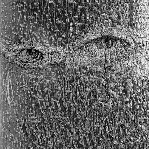 Wenn einen der Blick des Baumes verfolgt. Arbeit von Georges Yammine in der Galerie Bernheimer in Luzern. (Bild: Georges Yammine)