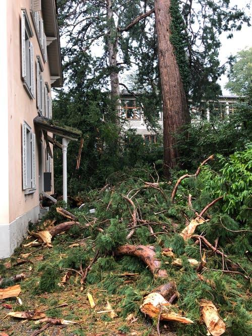 Der Blitz schlug in einen Baum beim Schulhaus Felsberg und verursachte grossen Schaden. (Bild: Feuerwehr Stadt Luzern)