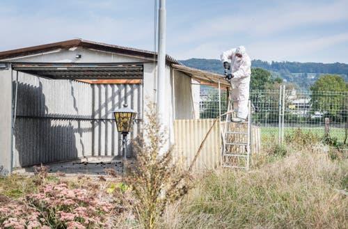 Aufgrund der Asbestbelastung müssen die Arbeiter Vorsicht walten lassen und tragen Schutzanzüge und Gesichtsmasken. (Bild: Andrea Stalder)