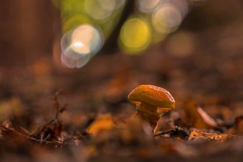 Stimmungsbild mit Pilz im Wald in Rotmonten bei St.Gallen. (Leserbild: Franziska Hörler - 15. September 2018)