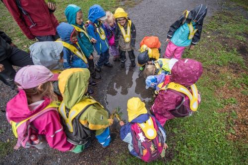 Das Wetter in Meggen meint es heute mit den Kindern nicht gut. Dafür gibt es für sie die Möglichkeit, Kulturen in Pfützen anzuschauen. (Bild: Pius Amrein, Meggen, 24. September 2018)
