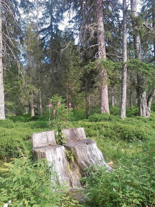 «Unsere Schattenplätze auf dem Langis» - aus und in der Natur. (Bild: Hedy Andrich)