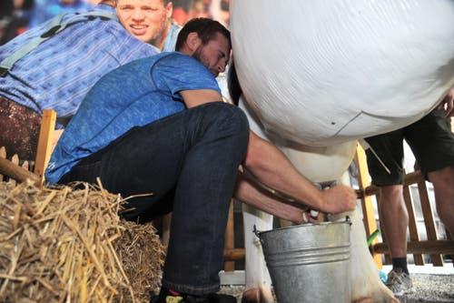 Ringer Nicolas Christen beim Melken. (Bild: Urs Hanhart, Altdorf, 9. September 2018)