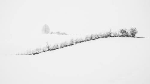 Schneelandschaft mit Hecke auf dem Kapf. (Leserbild: Franz Häusler - 5. Januar 2019)