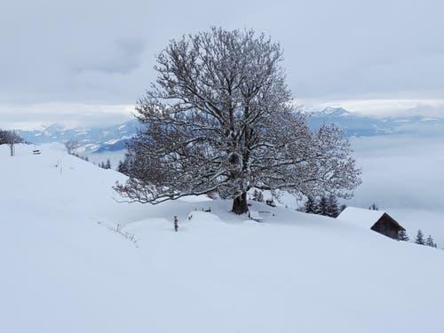 Während einer Schneeschuhtour oberhalb der Seebodenalp. (Bild: Verena Günther, 12. Januar 2019)