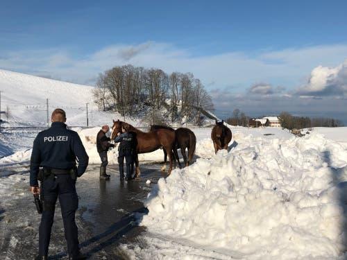 Die drei ausgebüchsten Pferde unter Polizeiaufsicht auf dem Parkplatz beim «Schwarzen Bären». (Bilder: Stadtpolizei St.Gallen - 15. Januar 2018