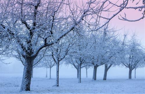 So schön kann ein kalter Wintermorgen sein. Blick in den verschneiten Baumgarten. (Bild: André Egli (Ettiswil, 18. Januar 2019))