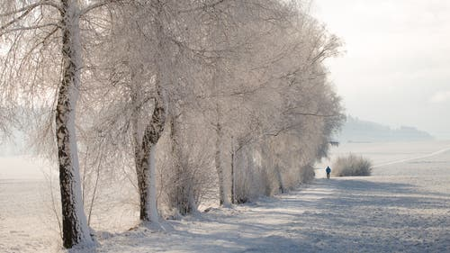 Spaziergang mir Hund. (Bild: Priska Ziswiler-Heller (Wauwilermoos, 18. Januar 2019))