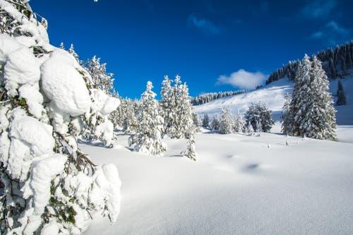 Verschneite Wälder – ein Traum! (Bild: Vinzenz Blum (15. Januar 2019))