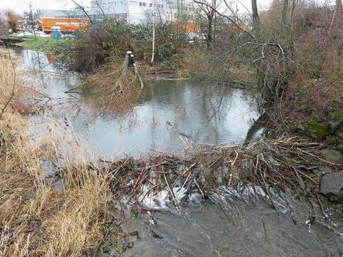 Weniger glücklich ist man bei der Gemeindeverwaltung mit dem Damm, den Biber an der Mündung des Seegrabens gebaut haben.