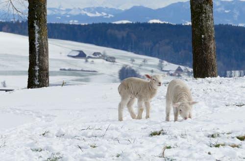 Brrrr... Ist das kalt. (Bild: Cécile Hüsler (Beromünster, 20. Januar 2019))