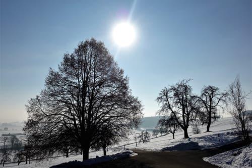 Auf dem Weg zum Buttenberg (Bild: Josef Habermacher (Rickenbach, 28. Januar 2019))