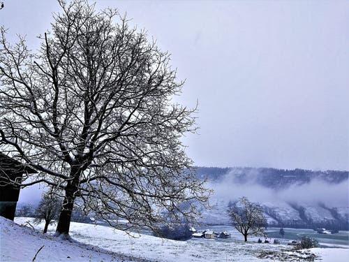 Schnee hat es jetzt auch in Malters. (Bild: Urs Gutfleisch (Malters, 5. Januar 2019))