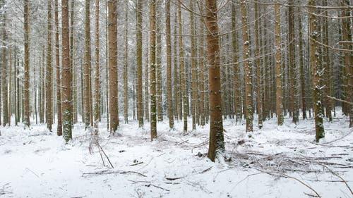 Baumlabyrinth im Zuswilerwald. (Bild: Priska Ziswiler-Heller (Ettiswil, 5. Januar 2019))