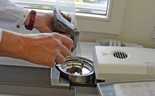 Im Labor wird der Wassergehalt der Pflanzen überprüft. (Bild: Karin Erni)