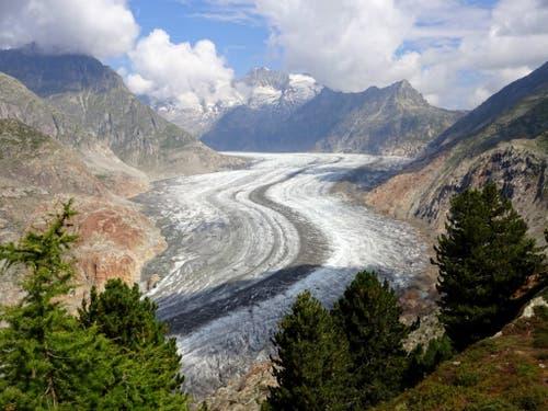 Die Zunge des Grossen Aletschgletschers verliert schnell an Dicke. (Bild: M. Huss)