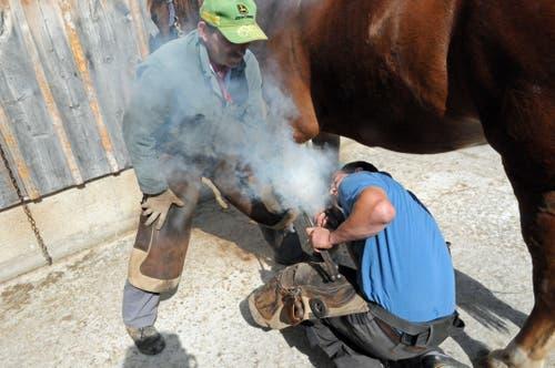 Noch beschlägt der Chef das Pferd: Hufschmied Beni Scherrer und Vater Sandro Scherrer (stehend). (Bild: Michael Hug)