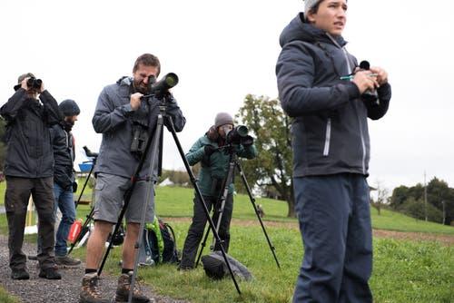 Kormorane ziehen die Hobbyornithologen in den Bann. (Bild: Dominik Wunderli, Kriens, 5. Oktober 2019)