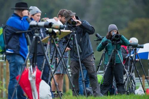 Die Ornithologiebegeisterten erblicken eine Gruppe Ringeltauben auf dem Acker vor Ihnen. (Bild: Dominik Wunderli, Kriens, 5. Oktober 2019)