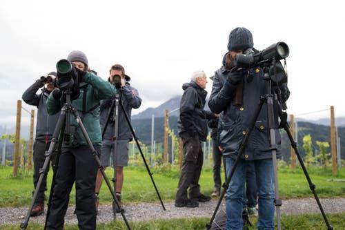 ...um etwa einen Greifvogel zu beobachten, muss das Fernrohr zur Hand gehen. Denn diese bleiben gerne auf Distanz. (Bild: Dominik Wunderli, Kriens, 5. Oktober 2019)