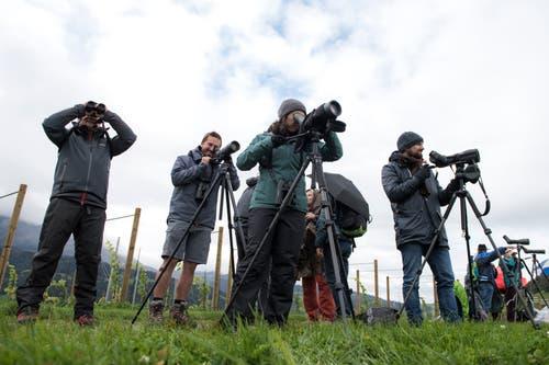 Ausgerüstet mit Fernglas, Fernrohr und gutem Gehör beobachten Hobbyornithologen am Samstagmorgen Zugvögel, die auf dem Weg in den Süden sind. (Bild: Dominik Wunderli, Kriens, 5. Oktober 2019)
