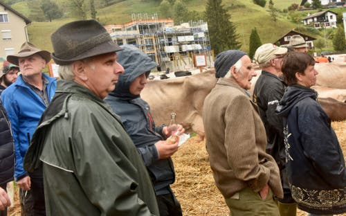 Mit kritischen Augen werden die Kühe im Ring bestaunt.