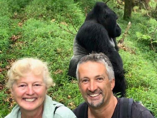 Gorilla Trecking in Uganda: So nahe an einem Silberrücken ist man selten. (Bild: Walter Odermatt)