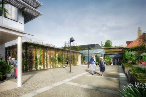 So soll sich schon im nächsten Sommer der neue Vortragsraum neben dem Tropenhaus präsentieren. Auf dem Dach und an den Fassaden soll es grünen und blühen. (Illustration: Stadt St.Gallen)