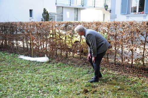 Armin Ruf, Gemeindeleiter der katholischen Kirche Weinfelden, ist der Besitzer der beiden weissen Pfauen. (Bild: Sabrina Bächi)